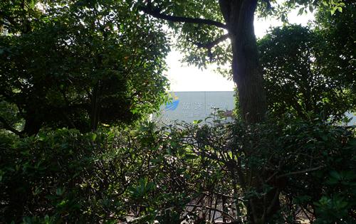 木々と木漏れ日と放送大学千葉学習センター