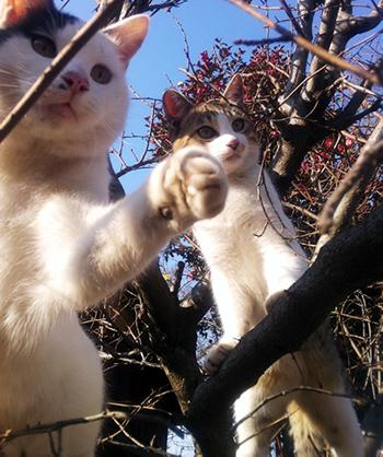 実家でネコと戯れる